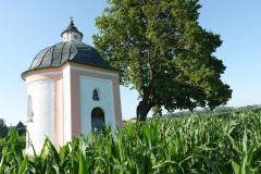 Hustenmutterkapelle-Feld