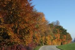 Landstrasse Herbst