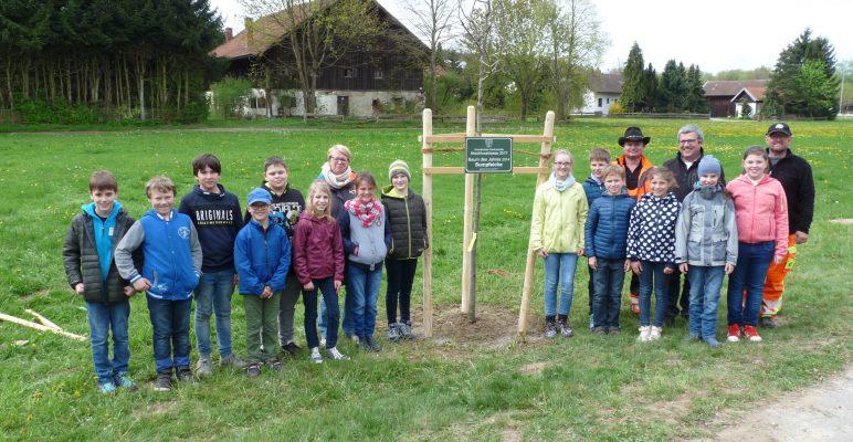 Ein neuer Baum für die Generationenallee