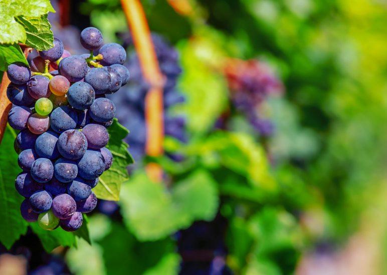Jahresausflug ins Weinviertel